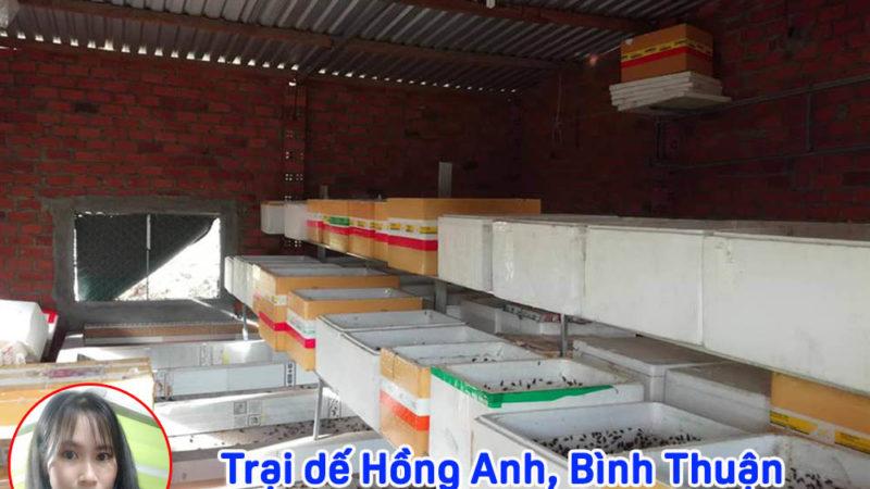 Trại dế Bình Thuận, Cung cấp Dế mèn giống, Dế mèn thịt