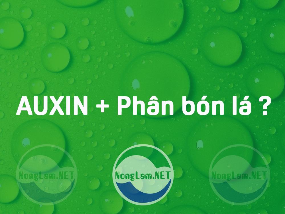 Pha auxin với phân bón lá