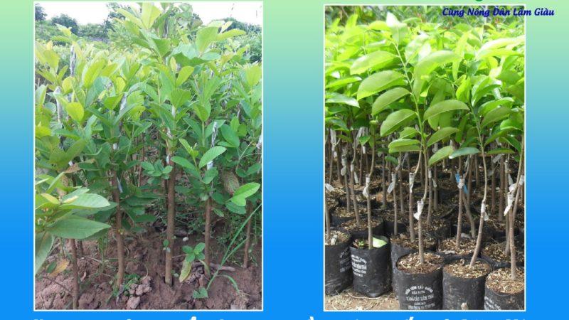 Hỏi – Đáp: Xin địa chỉ mua cây giống ở Đắk Nông