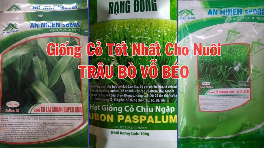Giống cỏ chăn nuôi Trâu Bò Vỗ Béo