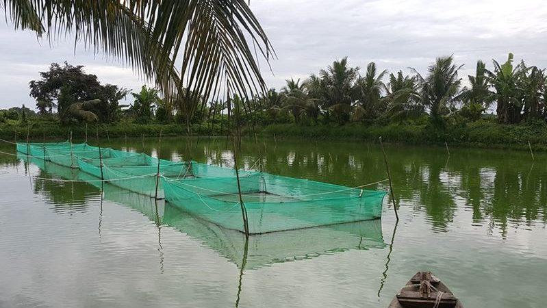Cách kiểm tra và giữ ổn định độ pH trong ao nuôi cá chạch lấu