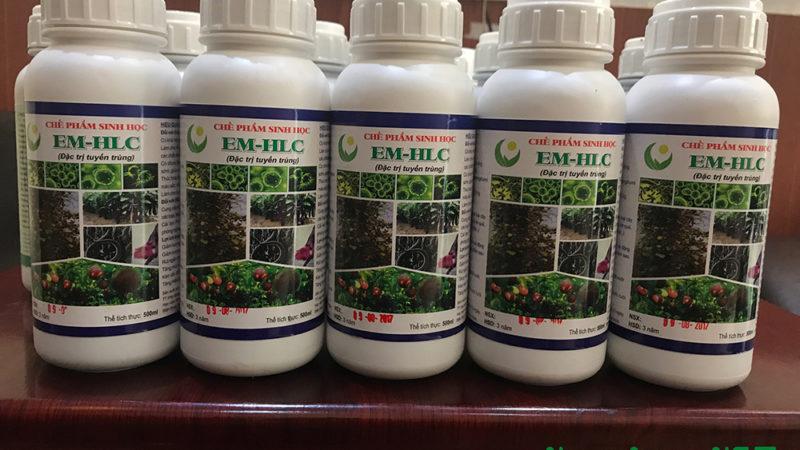 Chế phẩm sinh học EM HLC: Đặc trị tuyến trùng