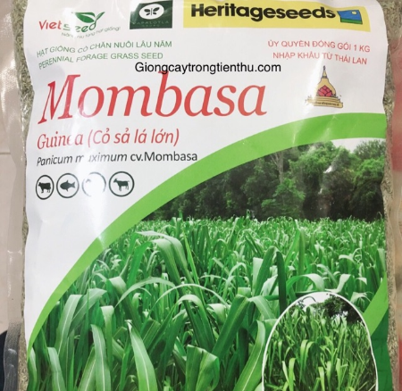 Giống cỏ Mombasa ghi nê