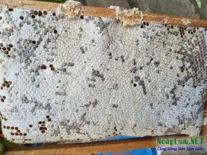 Nuôi ong mật thuần tự nhiên