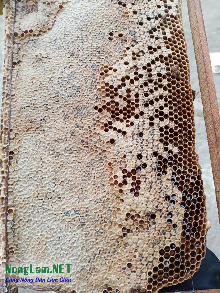 Mật ong rừng nguyên chất ở được sản xuất ở Tiên Yên Quảng Ninh