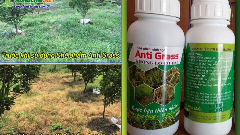 Thuốc trừ cỏ Anti Grass – Chế phẩm sinh học diệt cỏ hiệu quả