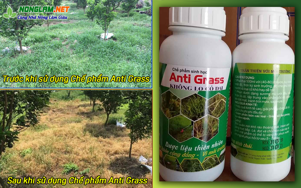 thuốc trừ cỏ anti grass