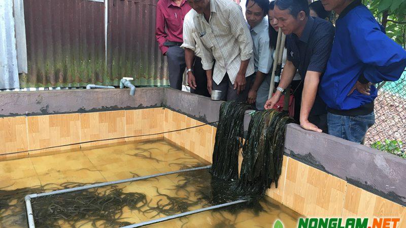 Kỹ thuật Nuôi Lươn không bùn trong bể
