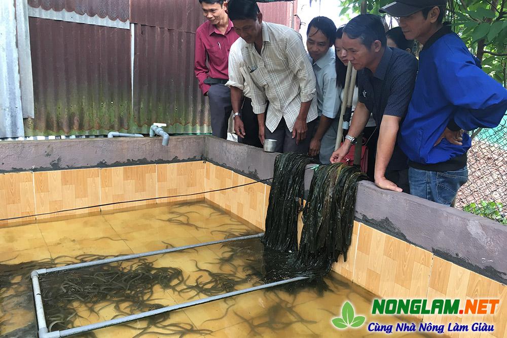 nuôi lươn không bùn