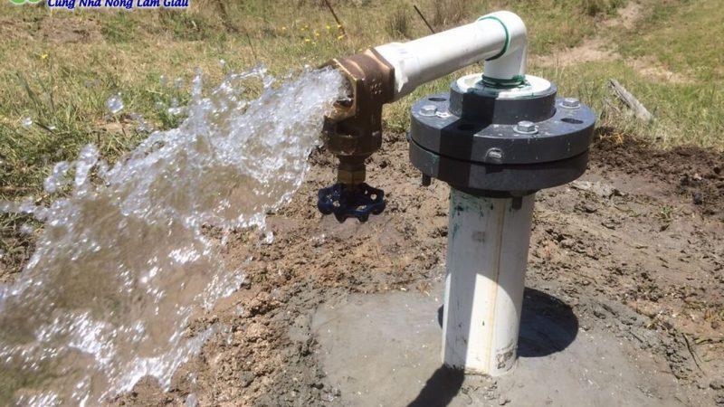 Cách xử lý nước máy, nước giếng để nuôi Cá, nuôi Ốc
