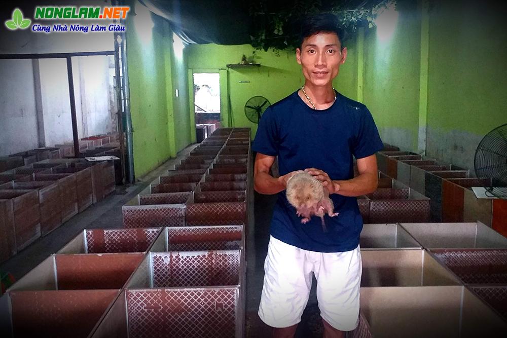 Mô hình nuôi dúi hiệu quả ở Tuyên Quang