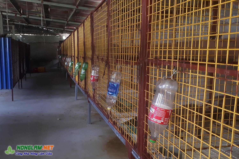 Máng uống nước tự động cho cầy vòi mốc